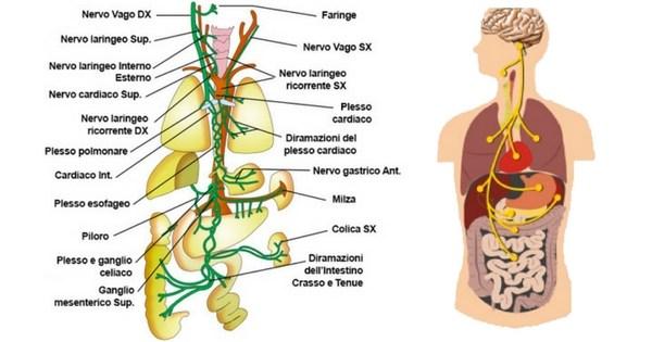 nervo-vago-stim